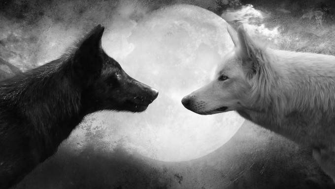 Wolf-and-Moon-Cool-HD-Wallpapers[1]